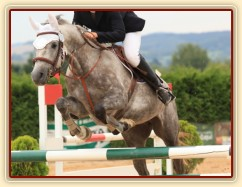 Vesna, KMK čtyřletých koní ve skocích (ZL) - 4. místo, Tachov 13.8.2014