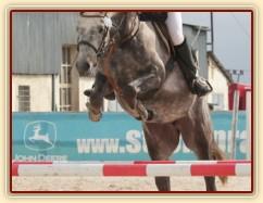 Vesna, KMK čtyřletých koní ve skocích (parkur Z), Zduchovice 15.5.2014