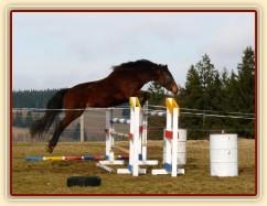 Čtyřletá Ascara a skok 130cm