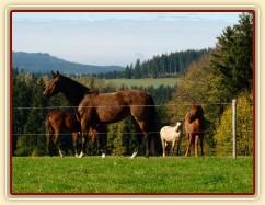 Klisny na pozdimní pastvině
