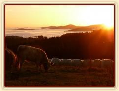 Naše budoucí mlíkárna, podzimní ráno