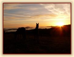 Stádo hřebců, podzimní východ slunce