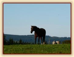 Stádo klisen, podzimní pastviny