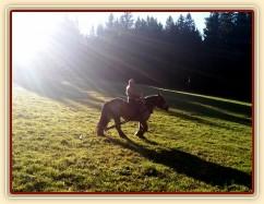 Tříletá Ardenka Fiona jede pracovat do lesa...
