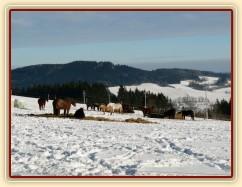 Zimní výběh, sláma a koně u senáže