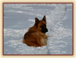 Nejlepší spaní je ve sněhu