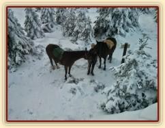 Novoroční vyjížďka, pod vrcholem Oblíku (1225m.n.m.)