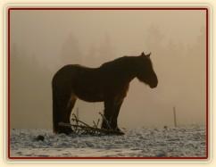 Ráno s mlhou...