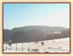 7.2.2015 - Příprava na sezónu je v plném proudu, písková jízdárna je perfektní i pod sněhem :-)