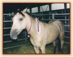 Mistrovství České republiky skoky pony 2003, Frenštát pod Radhoštěm. Greisy si užívá ve stáji stuhu a stříbrnou medaili.