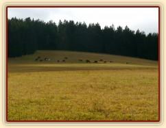 9.11.2015 - k vlastním 22 ha pastvin máme nově v nájmu dalších 13 hektarů,  takže stádo hřebců se bude ještě pást do konce listopadu :-)