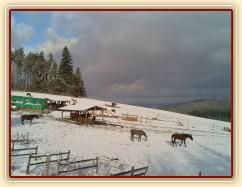 Všichni koně už jsou v zimním výběhu