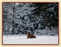 Pes polární :-)
