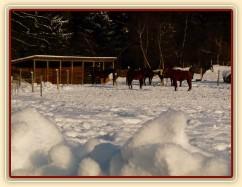 Sněhu je u nás spousta :-)
