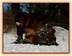 Válení ve sněhu, Will asi ztratil hlavu:-)