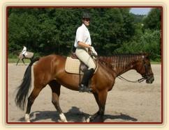 Opracovávání před drezurní zkouškou: uvolnění koně.