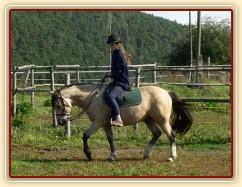 Radka a galen: uvolňování koně v klusu na dlouhé otěži