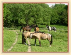 Bas na své pastvině vedle koní