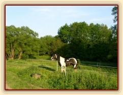 Bas na pastvině