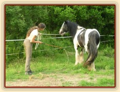 7 her podle Pata Parelli - ustupování podél ohrady, zastavení a otočení koně zpět k člověku