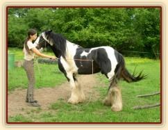 """7 her podle Pata Parelli - """"naštelování"""" koně před couváním do prostoru omezeného kládami"""