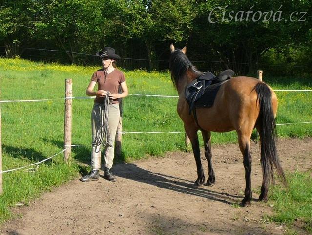 Práce ve volnosti v kruhovce - kůň sleduje člověka