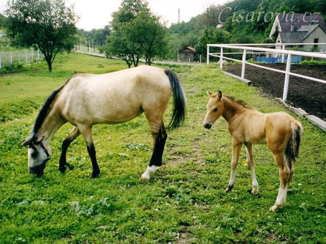 Greisy s Galenem v Loděnicích, Galen byl asi měsíc starý