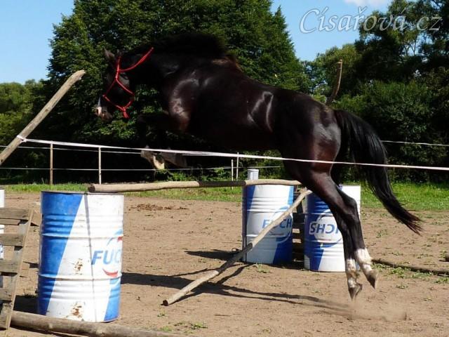 Léto 2009, Grant rád skákal a řady ve volnosti pro něj nebyly problém