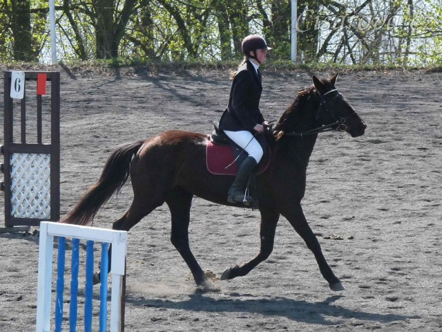 Arwen v kolbišti před soutěží stupně Z