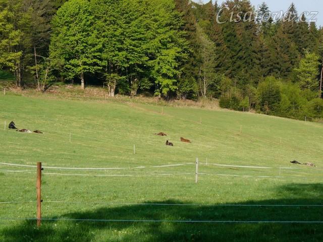 2.5.2011 - Celé stádo, všech osm hřebců, spí. A pak že někdo musí hlídat:-)
