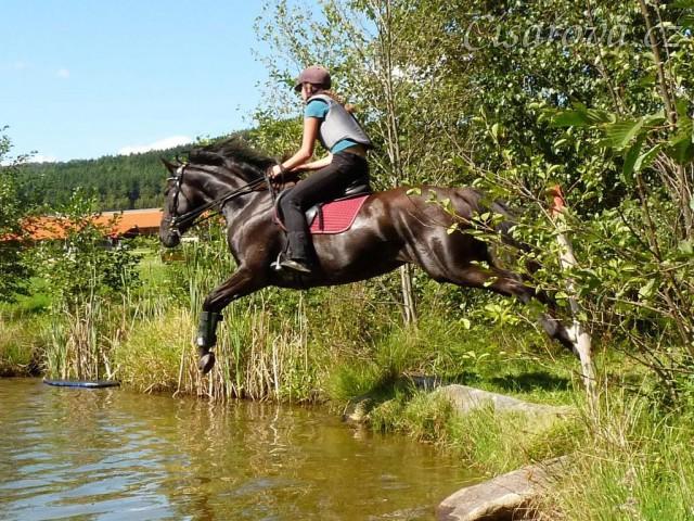 Arwen a skok do rybníka, Crossový trénink v Borové 29.8.