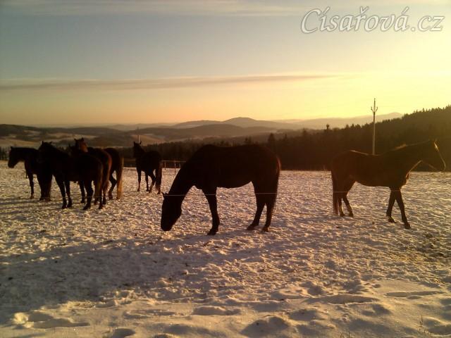 22.12.2011 - Tak už nám konečně začala zima, stádo klisen při východu slunce