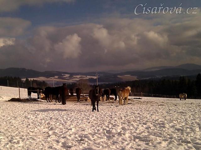 27.1.2012 - Krásný zimní den, koně u senáže