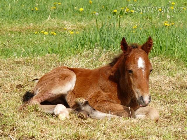 Griffin asi hodinu po narození