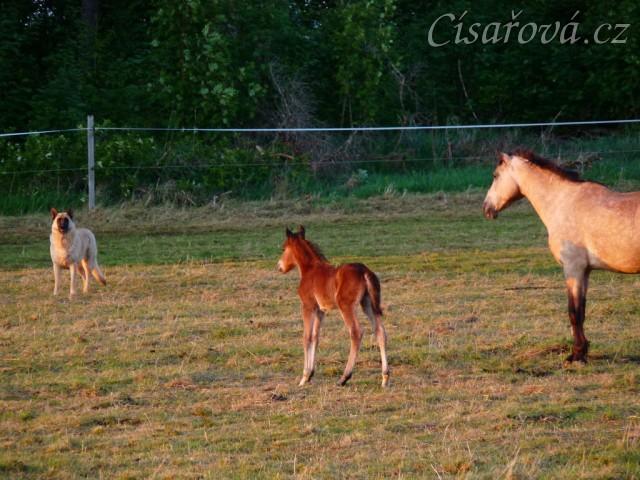 Kdo je větší, kůň nebo pes? :-)