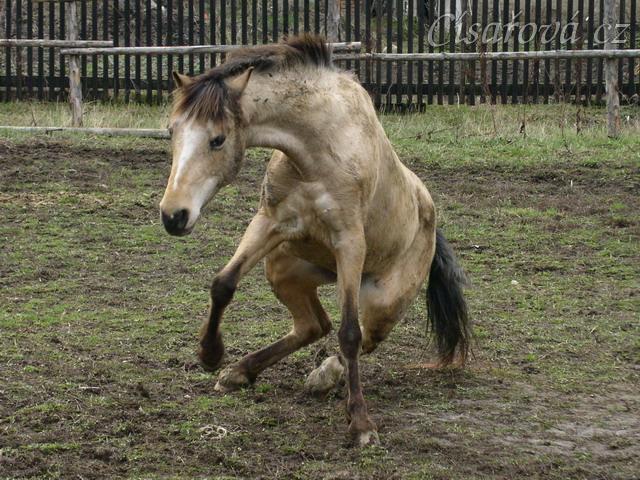 Bahno je dobrý přítel koně :-)