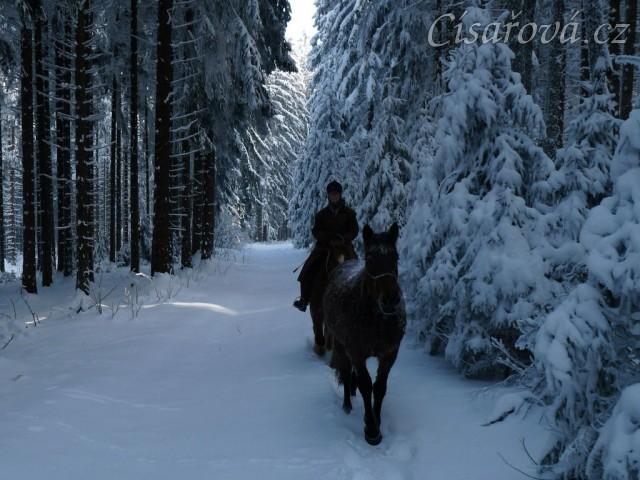 V lese... dvouletá Ascara na volno na vyjížďce