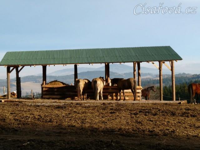 25.12.2013 - koně dostali k Vánocům zastřešený seník (krmelec na seno) s podlahou