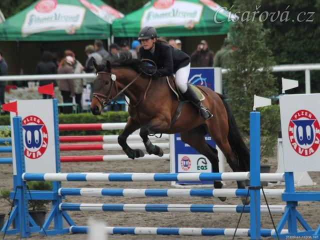 Ascara na závodech v Plzni, květen 2014, parkury ZM a Z