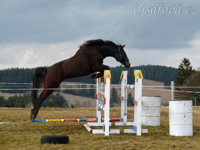 šestiletá Fivitas Dei a skok 135cm