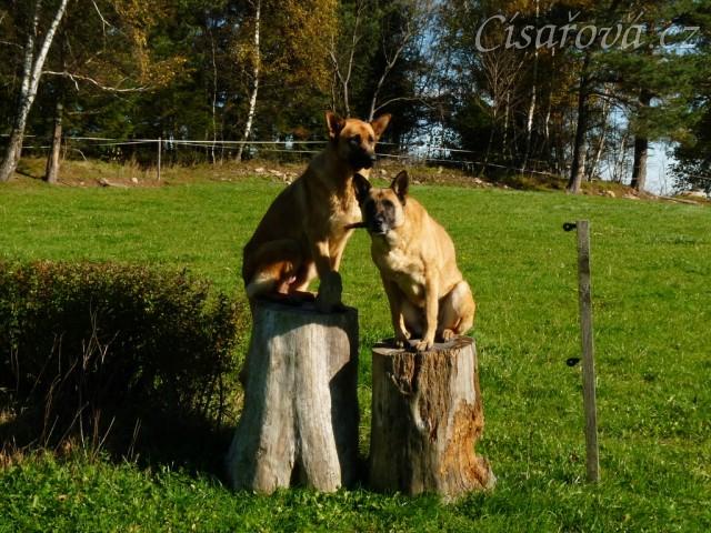 Naši psi na podstavci:-)