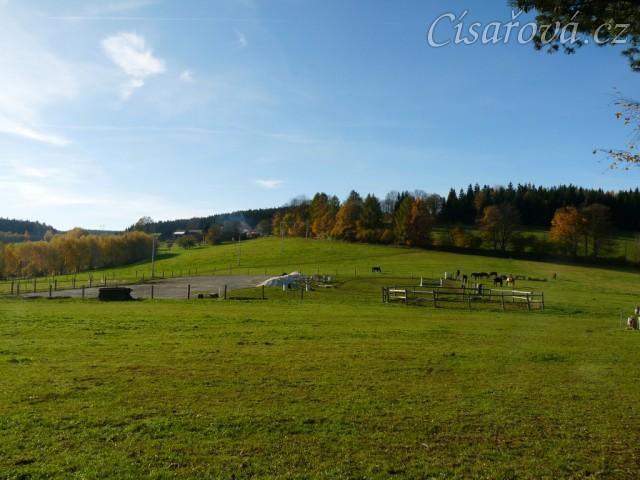 stádo klisen, podzim 2014