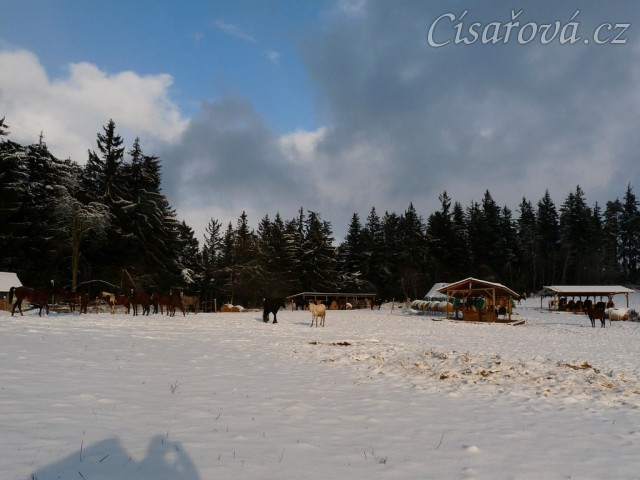 Všichni koně už jsou v zimovišti