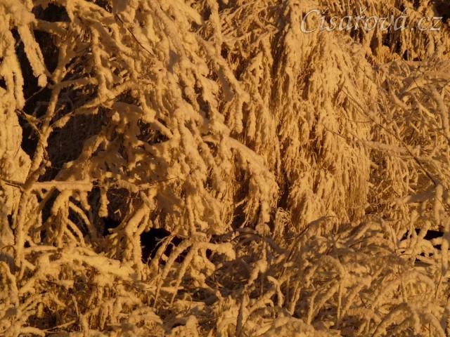Přes omrzlé větve nejsou koně ani vidět :-)