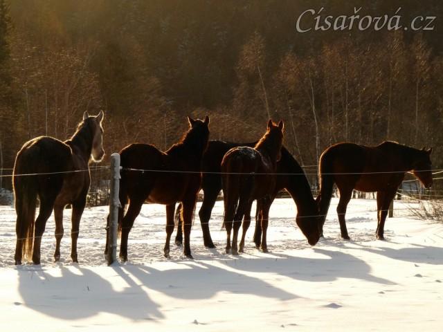 Jedno pěkné zimní ráno