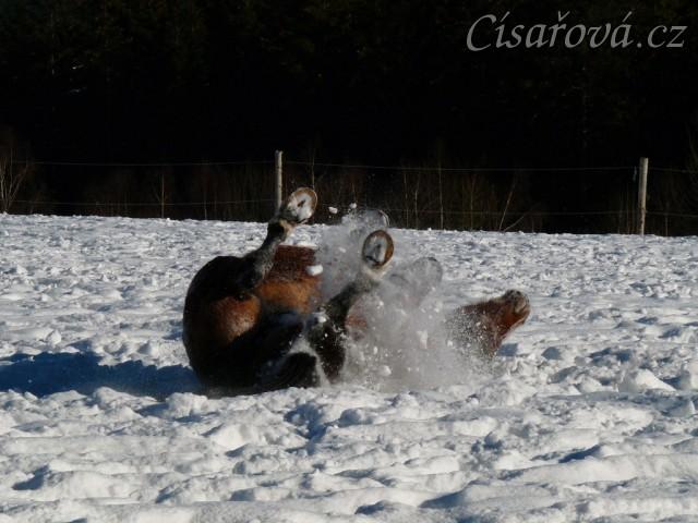 Válení ve sněhu je nejlepší:-)