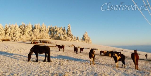 22.12.2016 - Všichni koně v jednom záběru :-)